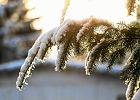 To by�a najcieplejsza zima w historii. �rednia temperatura na �wiecie nie by�a tak wysoka co najmniej od 1880 r.