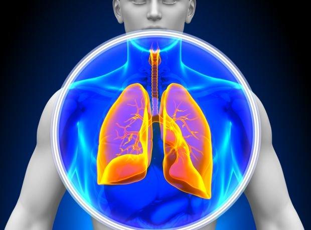 Drzewo oskrzelowe ułatwia sprawny transport powietrza do wszystkich zakątków płuc, a w efekcie skuteczną wymianę gazową