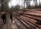 Puszcza Białowieska. Koleiny po pas, aktywiści blokują, gminy apelują, Trybunał się zbiera