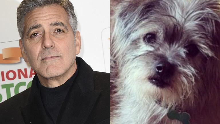 George Clooney, adoptowany pies