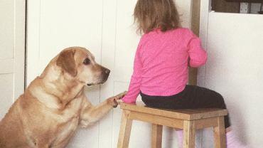 Pies w prezencie dla dziecka? Obowiązki będą należały do rodzica.