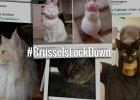 Koty umieszczanie z hashtagiem BrusselsLockDown