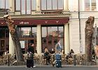 Ogłowione jesiony przed kawiarnią Szparka na pl. Trzech Krzyży