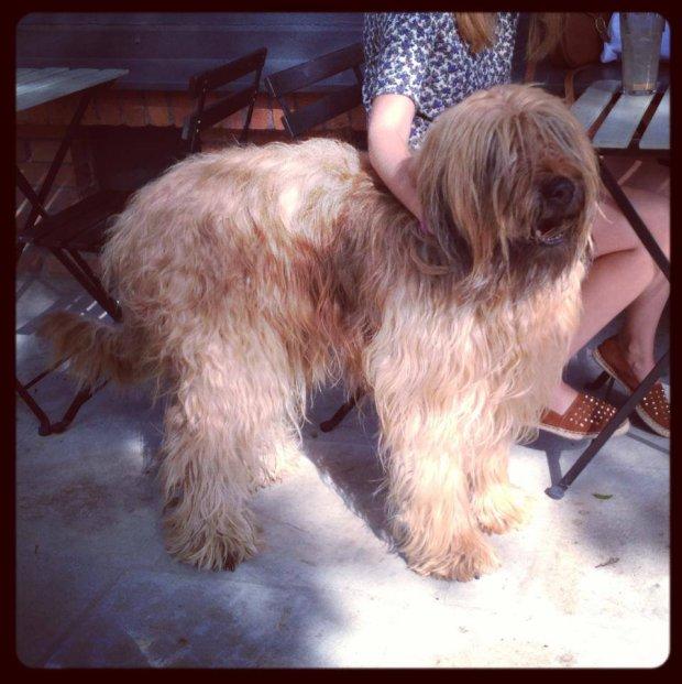 Psy w Secret Life cafe na Facebooku mają założony album ze zdjęciami