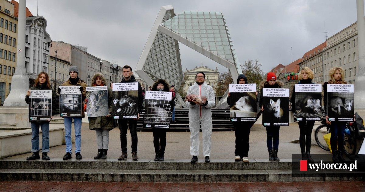 Plac Wolności Martwy Lis Bez Skóry Na Proteście