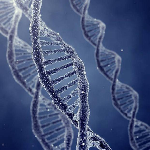 BRCA 1 - gen powoduj�cy raka piersi lub jajnika?