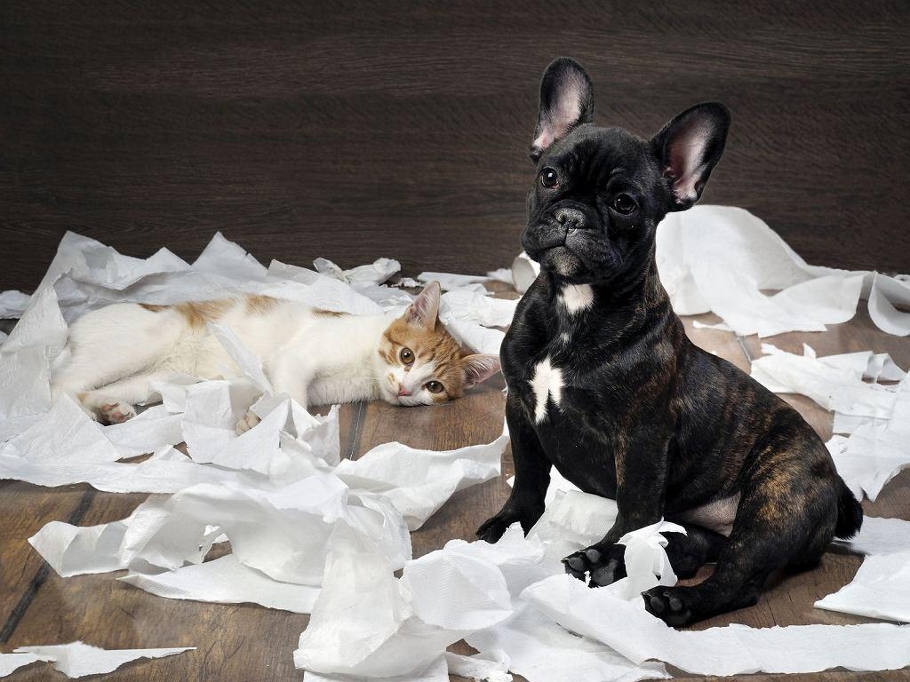 Koty i psy najbezpieczniej czują się, kiedy ich otoczenie jest przewidywalne (fot. Kozorog / iStockphoto.com)