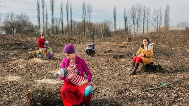 4 marca 2017 r., Kraków. 'Matki Polki na wyrębie' -  protest z inicjatywy Cecylii Malik przeciwko wycinaniu drzew
