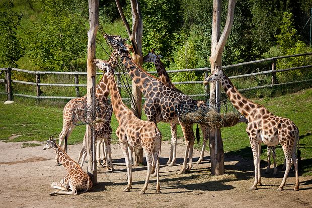 ZOO safari w Dvur Kralove nad Labem można się poczuć, jak w