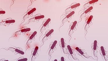 Bakteria coli ginie w temperaturze 60 stopni, niszczą ją też środki dezynfekujące