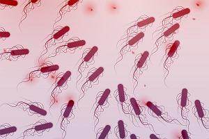 Niebezpieczna bakteria coli