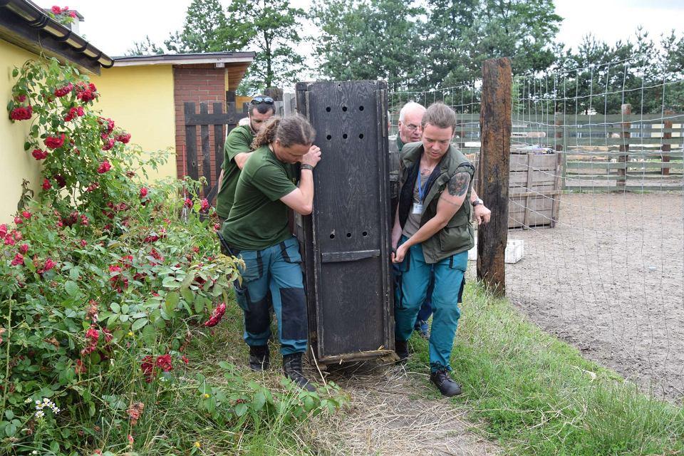 Ewakuacja zwierząt z hodowli pod Śremem