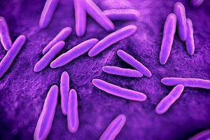 """Bakterie w jelitach lekiem na otyłość? """"To ekscytujące odkrycie"""""""