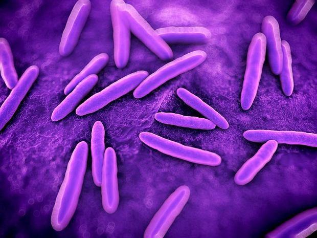 """Bakterie w jelitach lekiem na oty�o��? """"To ekscytuj�ce odkrycie"""""""