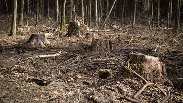 Wilcza Tryba w Puszczy Białowieskiej. Obszar jest chroniony m.in. na mocy Planu Zadań Ochronnych dla Obszaru Natura 2000