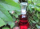 Wi�niowy sad w butelce