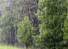 Pogoda dla wra�liwych. 17 - 23 czerwca