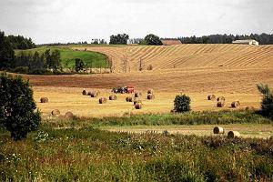 Polskie rolnictwo jest zbyt rozdrobnione, aby móc konkurować z resztą UE. Tylko 2 proc. gospodarstw jest wystarczająco dużych