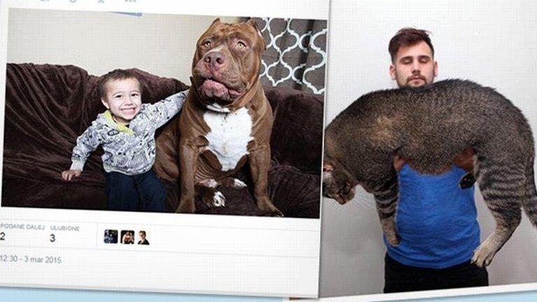 Metrowy kot i 80-kilowy pitbull. Te zwierzaki olbrzymy podbi�y serca internaut�w