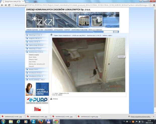 Lokal przy Sienkiewicza 11 ze szczurem w łazience
