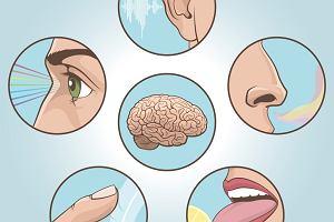 Zmysły. Jakie zmysły ma człowiek i jakie funkcje pełnią?