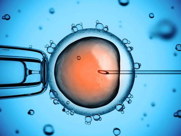 Komórki macierzyste (ES, embryonic stem cells, komórki pnia)