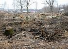 """""""Drzewo to sprawa publiczna"""". Politycy powstrzymają wycinkę zieleni?"""