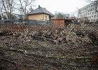 Jan Szyszko: Dostałem setki gratulacji za ustawę o wycince drzew. Wraca normalność