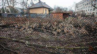 Jan Szyszko broni ustawy o wycince drzew. Na zdjęciu Kraków i prywatna działka z wyciętymi drzewami.