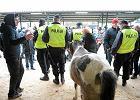Zaczynają się Wstępy w Skaryszewie. Czy naprawdę nie będzie wywozu koni na rzeź?