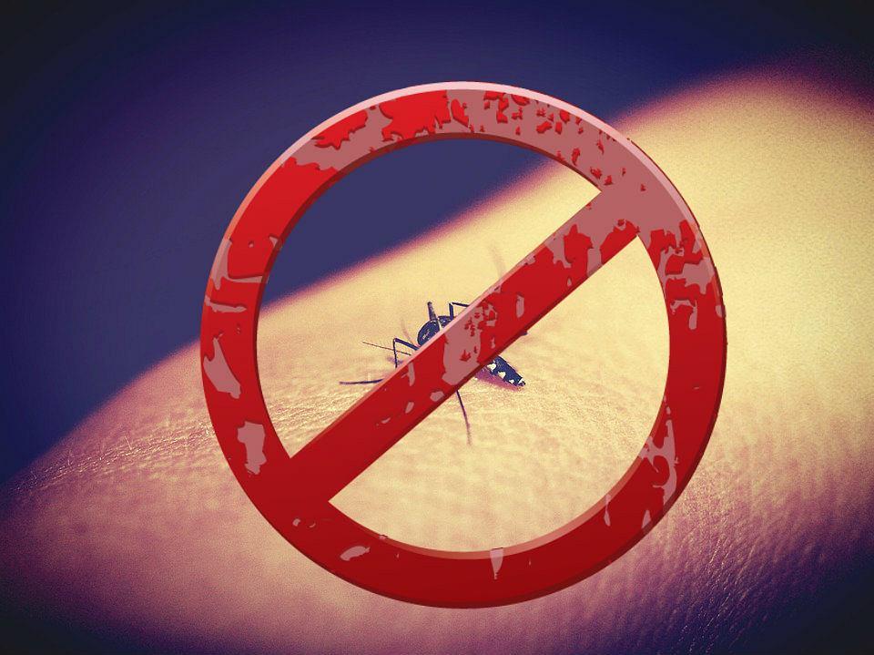Jak zrobić skuteczny środek na komary?