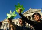 Gor�czka marihuany w Urugwaju. Izrael, Kanada i Chile chc� j� importowa�