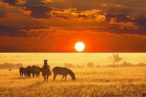 Afryka Tanzania - miejsca, które musisz zobaczyć