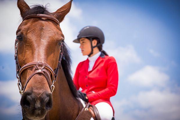Seat Leon Cupra kontra koń Calgary