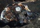 Znaleziono pierwsze ska�y z... plastiku. To jest to, co pozostawimy po sobie na wieki