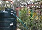 Jak tanio urz�dzi� ogr�d? 21 sposob�w na tani ogr�d