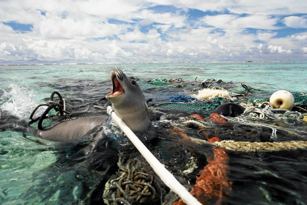the practice of ocean dumping should be banned in the united states A growing problem in international trade essays united states essay paper ocean dumping the practice of ocean dumping should be banned.