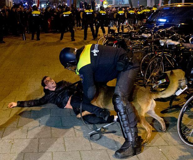 Turecka minister wyrzucona z Holandii. Policja z końmi i psami natarła na protestujących