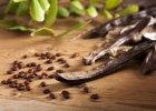 Dla nietoleruj�cych glutenu i maniak�w zdrowego od�ywiania - m�czka chleba �wi�toja�skiego?