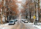 Jedyna taka ulica: nie sypią soli, bo szkoda drzew. I tak chcieli ludzie