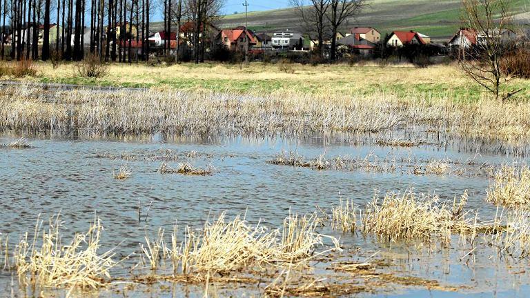 Wysoki poziom rzek uniemożliwia dojazd do ok. 120 gospodarstw. Na zdjęciu rozlewiska rzeki Nidy, Sobków
