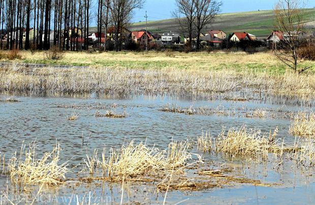 Wysoki poziom rzek uniemo�liwia dojazd do ok. 120 gospodarstw. Na zdj�ciu rozlewiska rzeki Nidy, Sobk�w