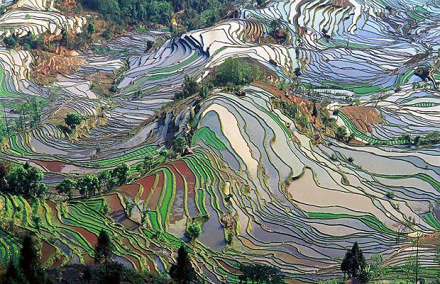 Tarasy ryżowe - Yunnan. Pola ryżowe w prowincji Yunnan tworzą zjawiskowy krajobraz, który w tym roku trafił na Listę Światowego Dziedzictwa UNESCO. A mianowicie do 45 najpiękniejszych miejsc w Chinach komisja zakwalifikowała prefekturę nad rzeką Hong, którą zamieszkują ludy Hani oraz Yi, tradycyjnie zajmujące się uprawą ryżu.