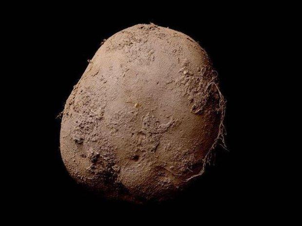 Fotografia ziemniaka sprzedana za milion dolar�w
