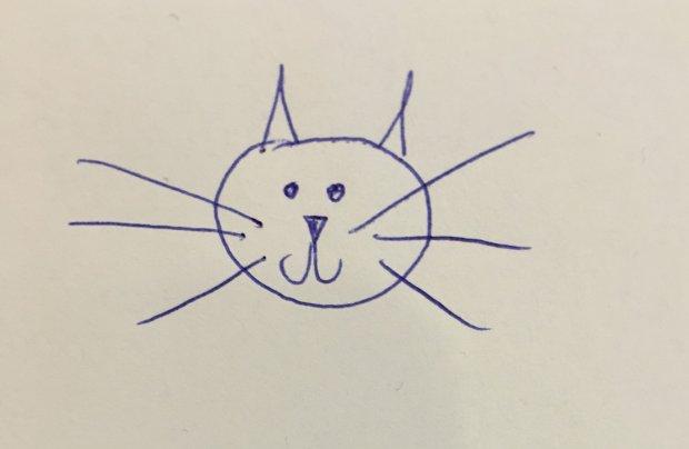 Jak narysować kota? Najważniejsza jest głowa