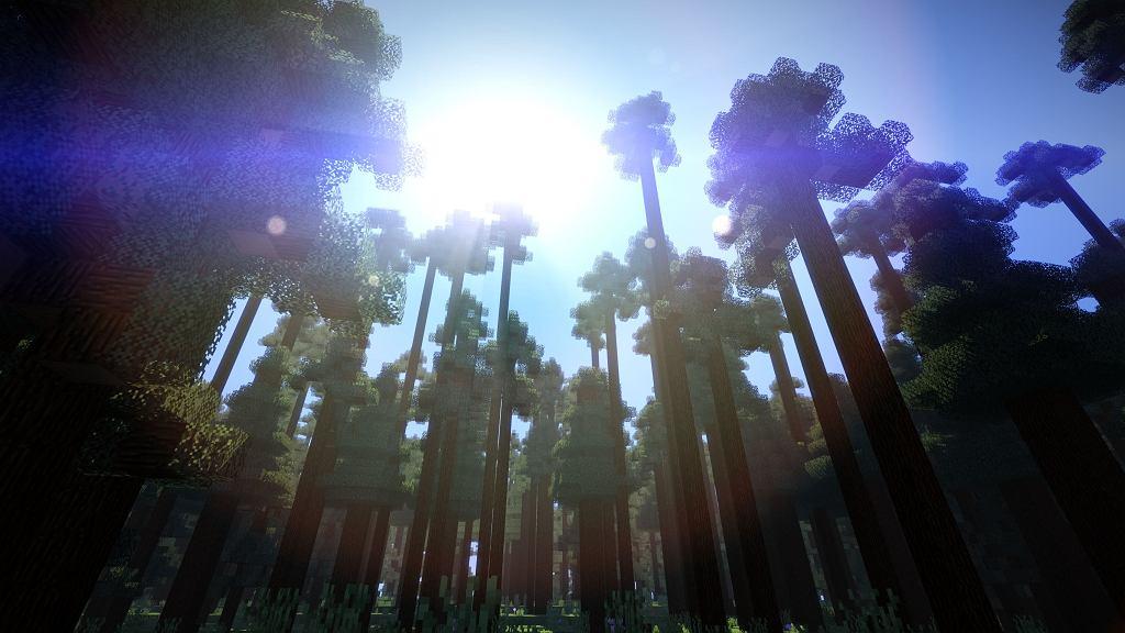 Puszcza Białowieska na platformie Minecraft - zrzut ekranu