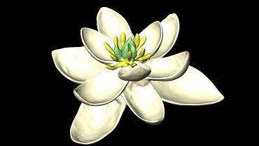 Przodek wszystkich kwiatów sprzed 140 mln lat