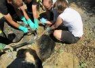 Pies zatopiony w asfalcie. Strażacy ratowali go 5 godzin