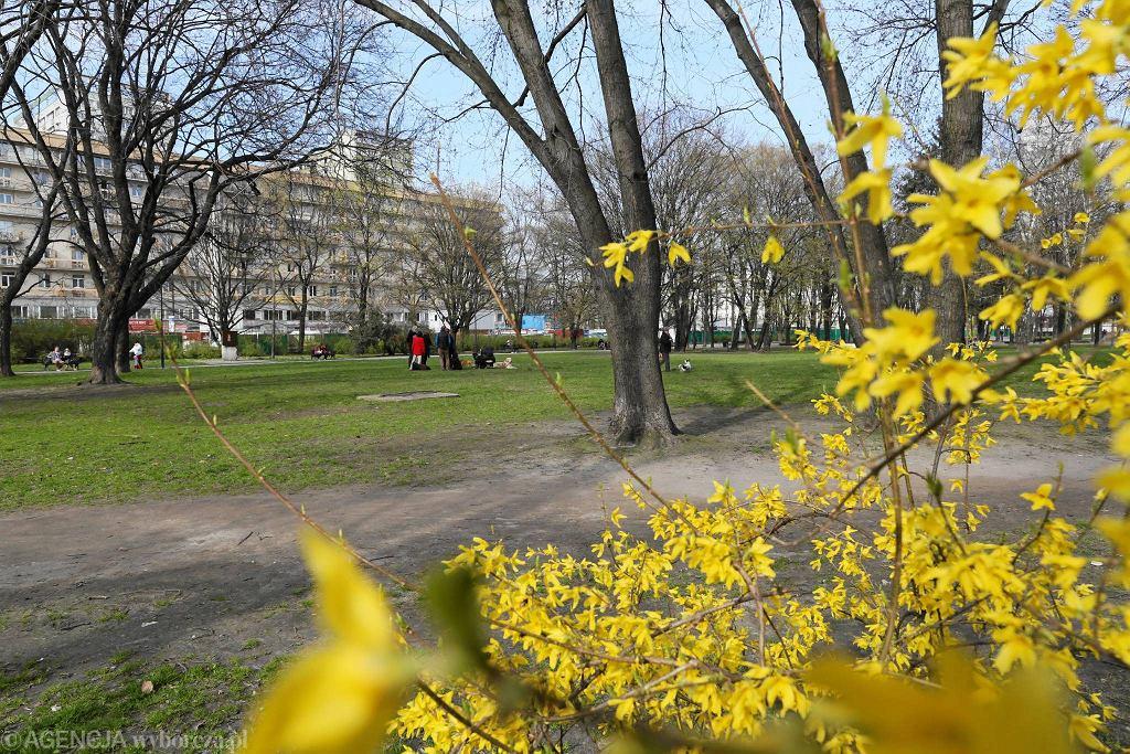 Kwitnące kwiaty i drzewa na wiosnę w parku Świętokrzyskim pomiędzy ul. Emilii Plater a Marszałkowską