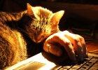 Mała Mi - kotka, która miała być niezniszczalna jak Mała Mi z Muminków